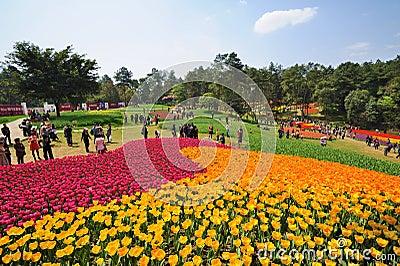 Festiwalu jeziorny poli- shixiang turystyki tulipan Zdjęcie Editorial