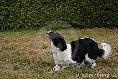 Fetching the ball