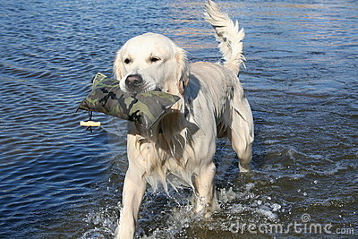 Fetching retriever