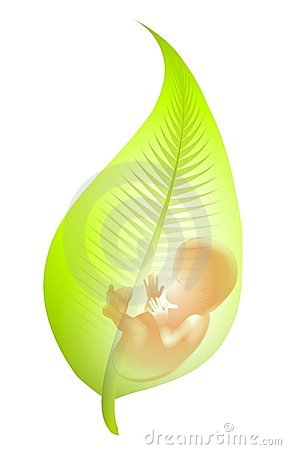Free Fetus In Green Leaf Royalty Free Stock Images - 4737939