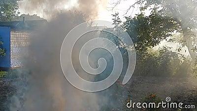 Feuerfeuer brennt Zweige stock video