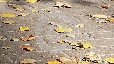 Feuillage d'automne jaune sur les pavés banque de vidéos