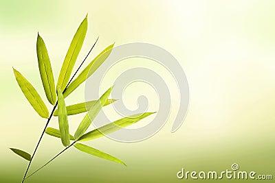 feuille en bambou verte et fond vert clair mou photo stock image 70652483. Black Bedroom Furniture Sets. Home Design Ideas