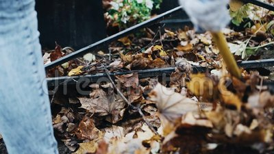 Feuilles d'érable à perte en automne La fille les enlève du sol banque de vidéos