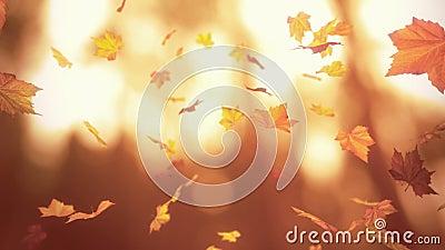 Feuilles d'automne en baisse