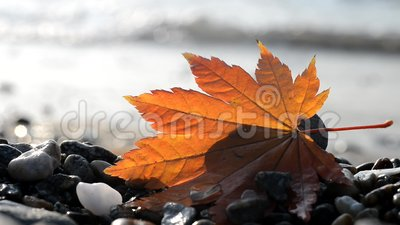 Feuilles d'automne sur la côte banque de vidéos
