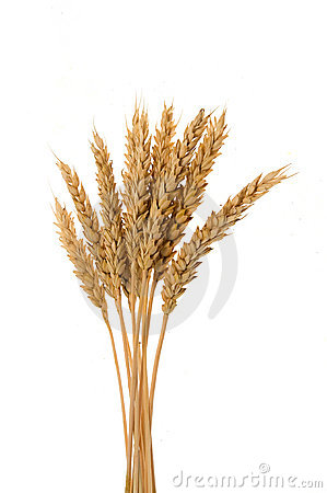 Free Few Ears Of Wheat Stock Photography - 14920922