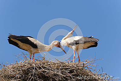 A few of the stork nest.