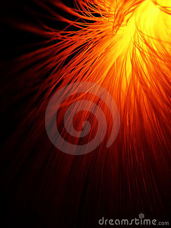 Free Fiber Optic In Fire Red Stock Photo - 4538540