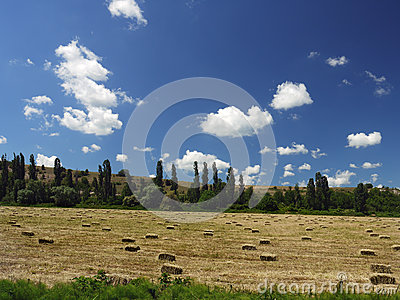 A field of cut grass