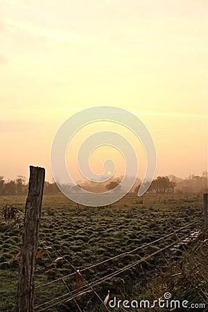 Field in the dawn