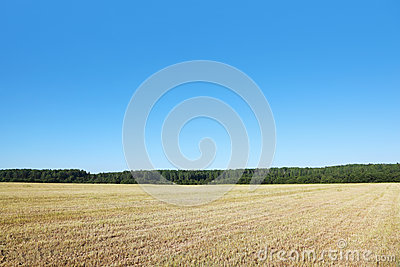 Field with dry grass