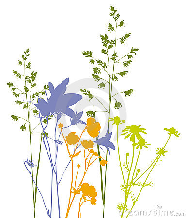 Free Field Flowers, Herbs And Plants, Vector, Traced Royalty Free Stock Image - 908386