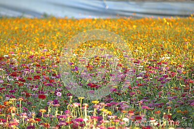 Field Of Flowers Free Public Domain Cc0 Image