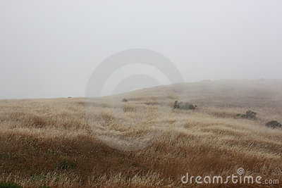 Field In Fog Stock Photo - Image: 10594220
