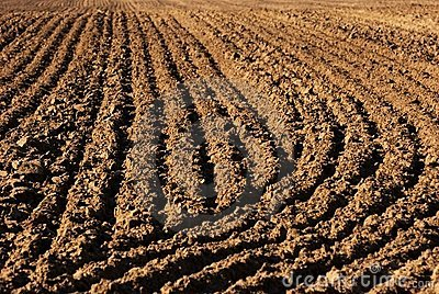 Field furrows