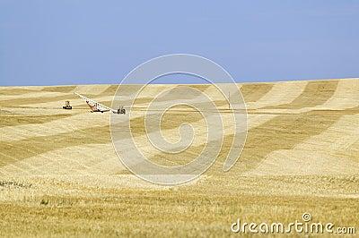 Field of grain alongside
