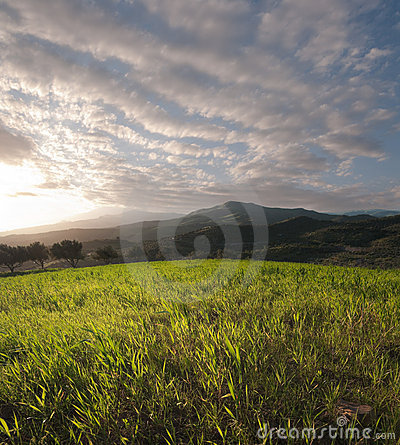 Field Of Grass At The Sunset