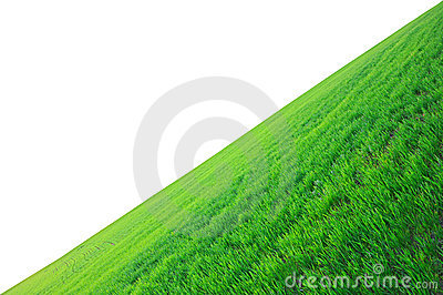 Field of a green grass