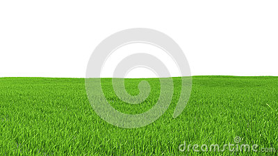 Field with green grass on a white background