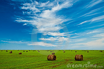 Field with hay stacks