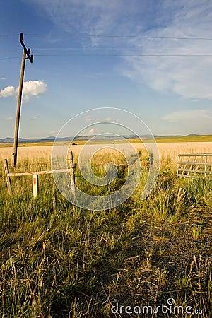 Field in Helena