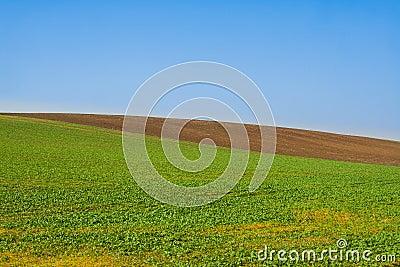 Field minimal