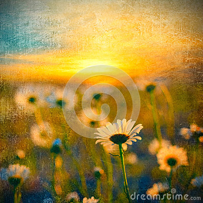 Free Field Of Daisies Royalty Free Stock Photo - 41743425