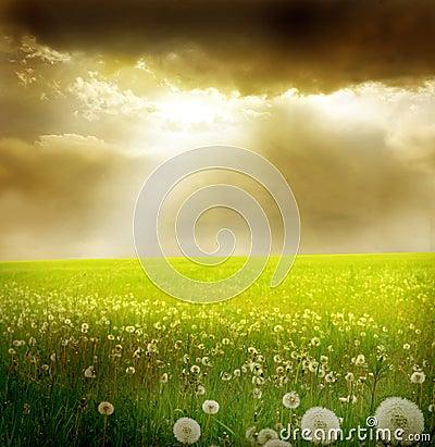 Free Field Of Dandelions Stock Image - 21446871