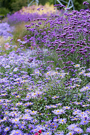 Free Field Of Flowers Royalty Free Stock Photos - 285268