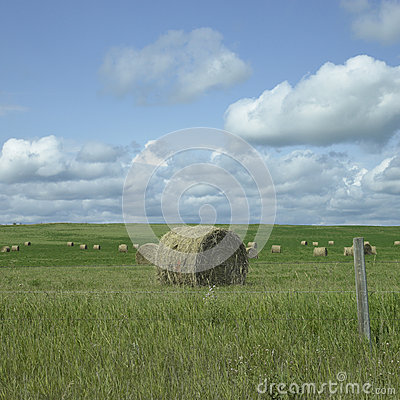 Free Field Of Hay Royalty Free Stock Image - 30788916