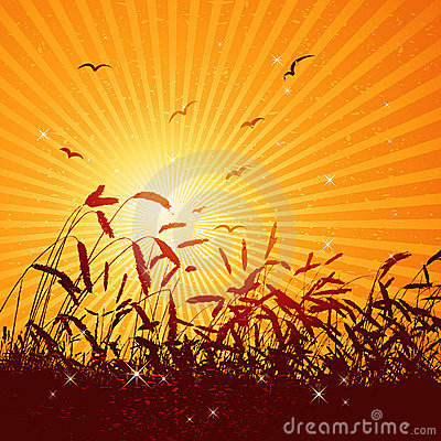 Free Field Of Wheat, Vector Stock Images - 3003964
