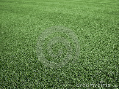 Field of Perfect Turf