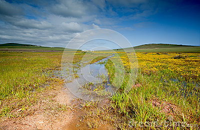 Field with standing water