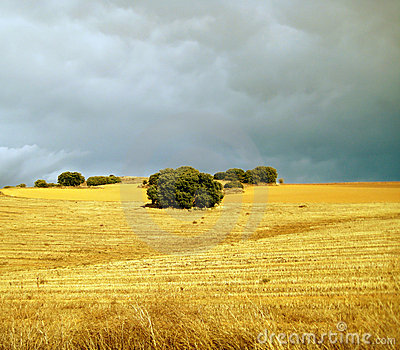 Field in stormy weather.