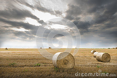 Field with straw bales