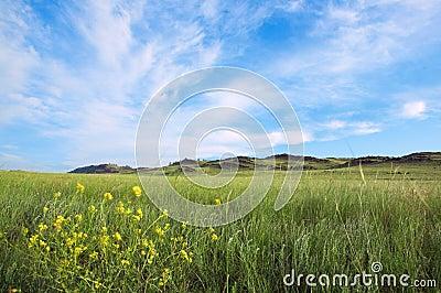 Field under blue sky