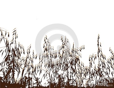 Field under of grass and cereals