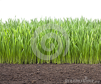 Field Wheat Grass Soil