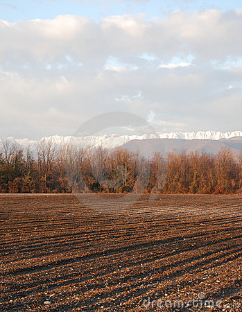 Field in Winter, Friuli