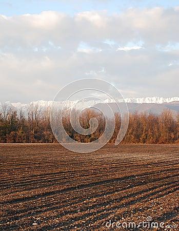 Field in Winter, Friuli