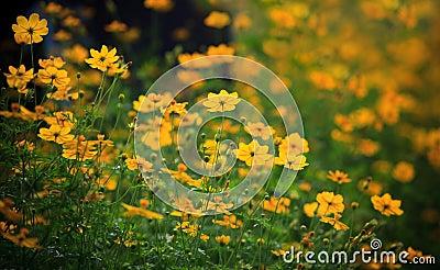Field of yellow flower  meadow