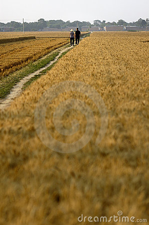 Fields Editorial Stock Photo