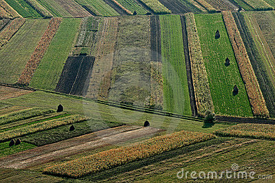 Fields autumn crops