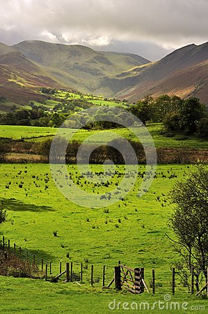 Fields and fences, Lake District, Cumbria