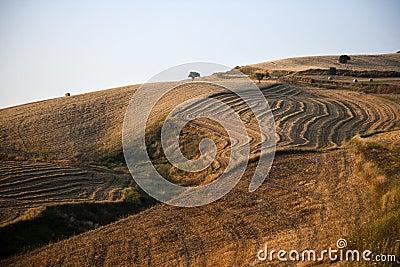 Fields grain