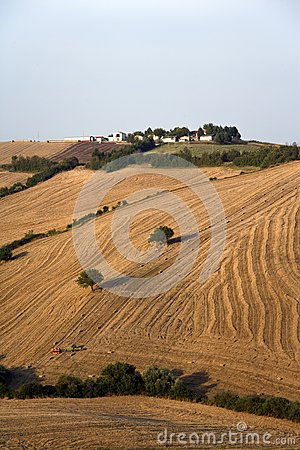 Fields grain with bales