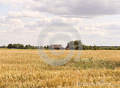 Fields of Lithuania