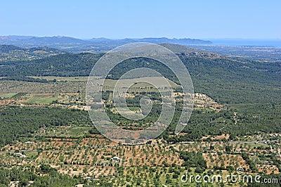 Fields of Majorca