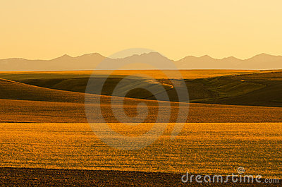 Fields and mountains at sunset, Montana, USA